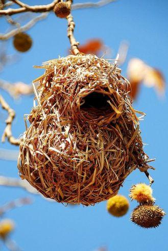 26 nid